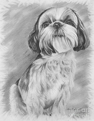 Shih Tzu Drawing - Drawing Of A Shih Tzu by Lena Auxier