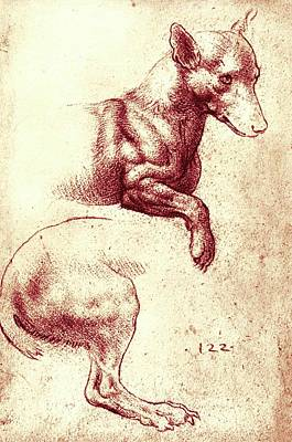 Drawing Of Dog's Head And Hind-leg Art Print