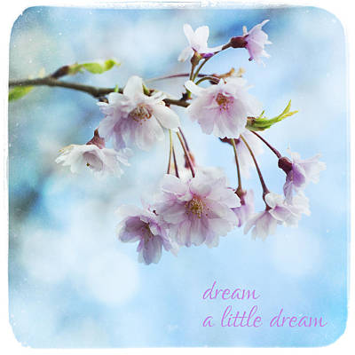 Photograph - Dream A Little Dream by Tammy Wetzel