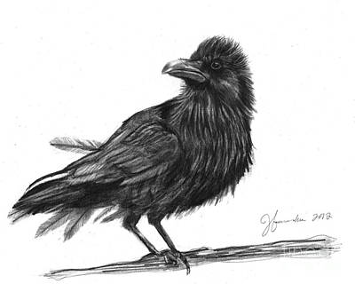 Blackbird Drawing - Dream Crow by J Ferwerda