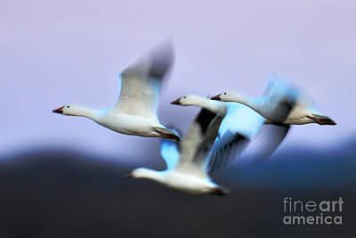 Photograph - Dream Flight by Craig Leaper