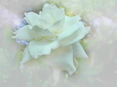 Digital Art - Dream Flower by Ginny Schmidt