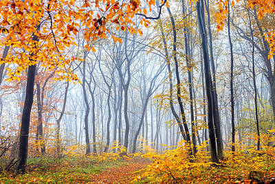 Danube Photograph - Dream Forest by Evgeni Dinev