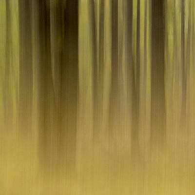 Photograph - Dream Forest by Rob Huntley