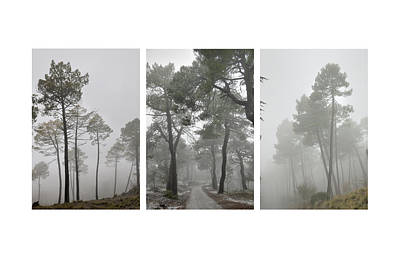 Dream Forests Triptych Art Print