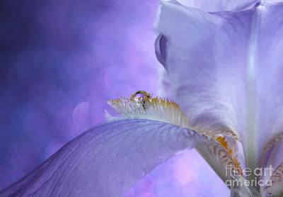 Dream In Violet Art Print by Krissy Katsimbras