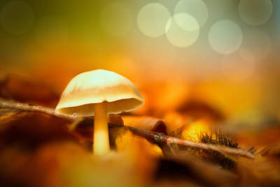 Dream Mushroom Art Print by Dirk Ercken