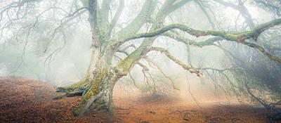 Photograph - Dream Oak II Color 1 by Alexander Kunz