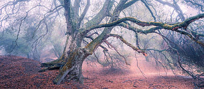 Photograph - Dream Oak II Color 2 by Alexander Kunz