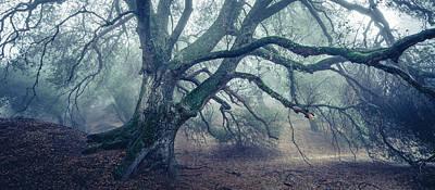 Photograph - Dream Oak II Color 3 by Alexander Kunz