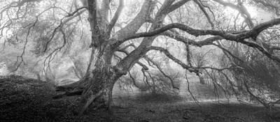 Photograph - Dream Oak II Mono by Alexander Kunz