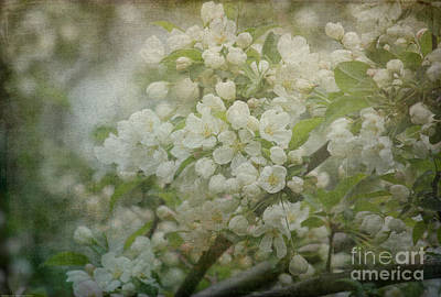 Dream Of Spring Art Print by Arlene Carmel