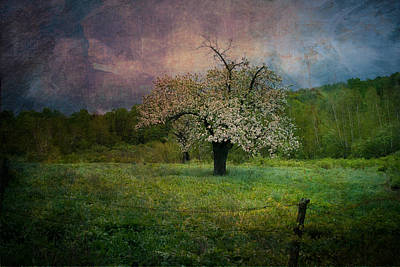 Photograph - Dream Of Spring by Jeff Folger