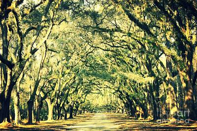 Savannah Dreamy Photograph - Dream Of The South by Carol Groenen