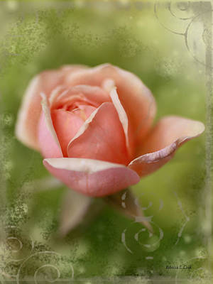 Photograph - Dream Rose by Bellesouth Studio