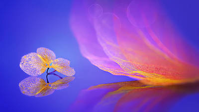 Delicate Photograph - Dream by Sophie Pan