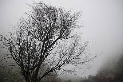 Dreamer Tree Art Print by Guido Montanes Castillo