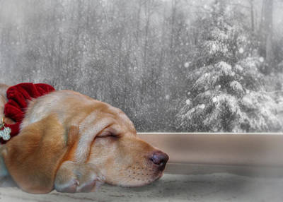Labrador Digital Art - Dreamin' Of A White Christmas 2 by Lori Deiter