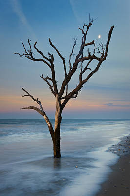 Edisto Photograph - Dreaming In Dali by Joseph Rossbach