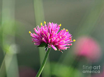 Dreaming In Fuschia II Art Print by Suzanne Gaff