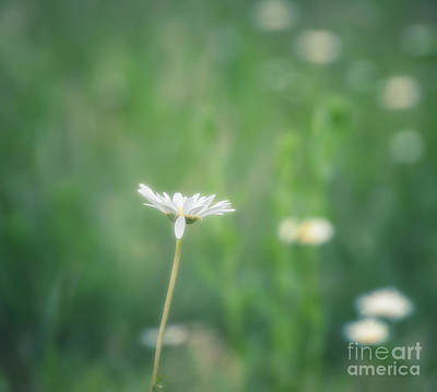 Photograph - Dreaming In Spring by Julie Clements