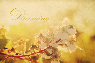 Photograph - Dreaming by Jenn Bowers