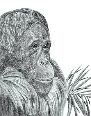 Orangutan Drawing - Dreaming Of A Better World by Pencil Paws