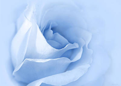 Photograph - Dreaming Of Blue Roses by Jennie Marie Schell