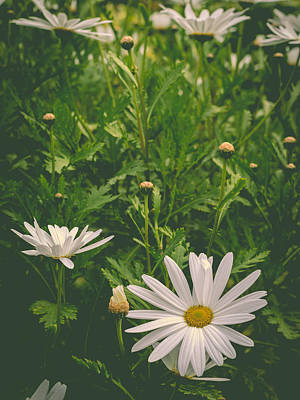 Photograph - Dreaming Of Daisies by Marco Oliveira