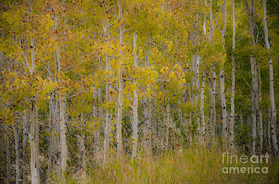 Photograph - Dreaming Of Fall by Dee Cresswell