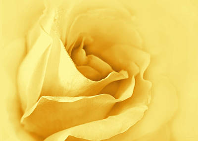 Photograph - Dreaming Of Yellow Golden Roses by Jennie Marie Schell