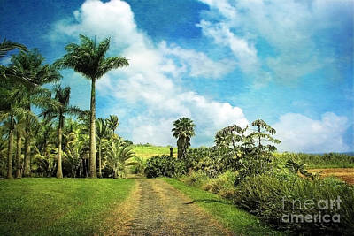 Photograph - Dreaming Of Hilo by Ellen Cotton