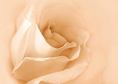 Photograph - Dreaming Of Peach Roses by Jennie Marie Schell