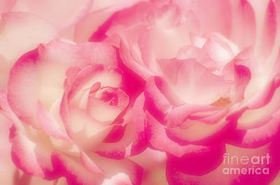 Photograph - Dreaming Of Roses by Jim And Emily Bush