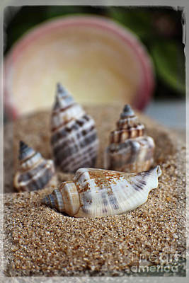Photograph - Dreaming Of Sand Seashells And Sandcastles by Ella Kaye Dickey