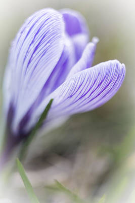 Photograph - Dreaming Of Spring by Caitlyn  Grasso