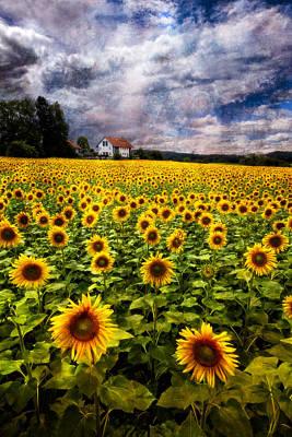 Dreaming Of Sunflowers Art Print by Debra and Dave Vanderlaan