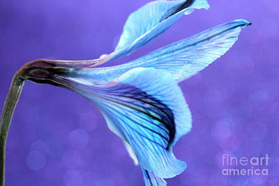 Blue Flowers Photograph - Dreaming Of Tomorrow by Krissy Katsimbras