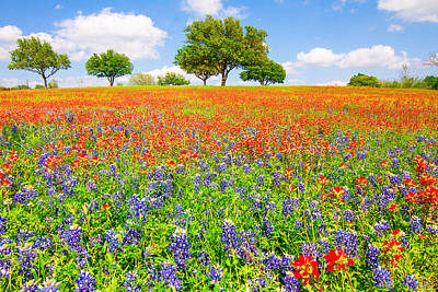 Texas Bluebonnet Wildflowers Landscape Flowers Spring Photograph - Dreaming Of Wildflowers by Ellie Teramoto