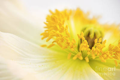 Dreaming Poppy Art Print by Angela Doelling AD DESIGN Photo and PhotoArt