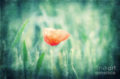 Poppies Field Mixed Media - Dreaming Summer by Angela Doelling AD DESIGN Photo and PhotoArt