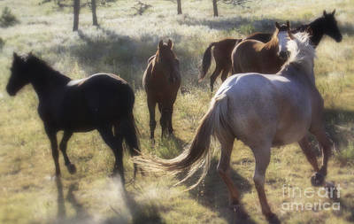 Photograph - Dreaming Wild Horses by Kate Purdy