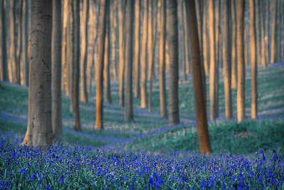 Bluebells Wall Art - Photograph - Dreams Are Made Of These by Adrian Popan
