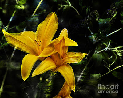 Photograph - Dreams Of A Day Lily by Belinda Greb