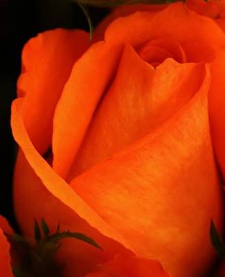 Amature Photograph - Dreams Of Orange by Bruce Bley