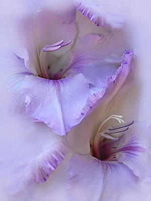 Dreams Of Purple Gladiola Flowers Art Print by Jennie Marie Schell