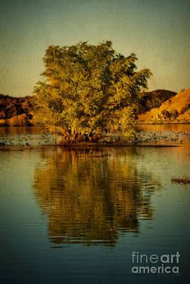 Willow Lake Digital Art - Dreams Of Reflection by Medicine Tree Studios