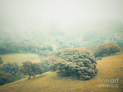 Photograph - Dreams Of Santa Ysabel II. by Alexander Kunz