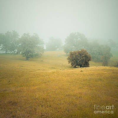 Photograph - Dreams Of Santa Ysabel Vii. by Alexander Kunz