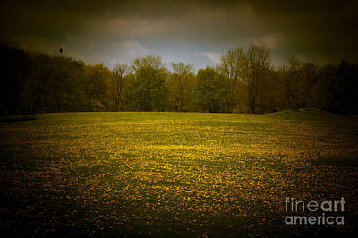 Photograph - Dreamscapes - Field With Bird 2 by Kathi Shotwell